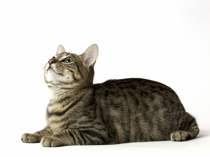 愛猫の様子はおかしくありませんか?