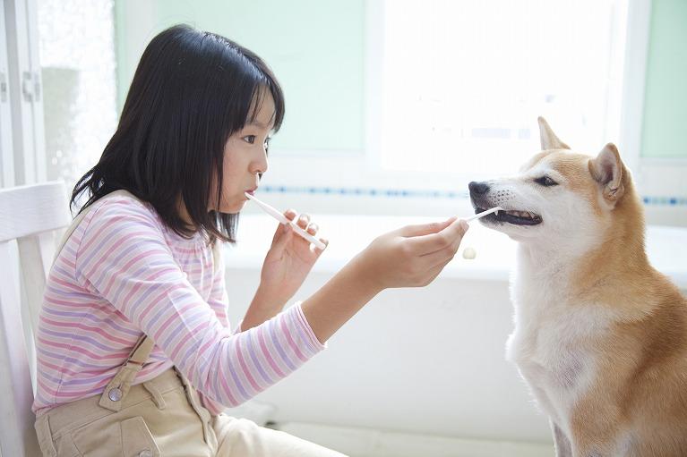 ワンちゃんの歯の健康について考えてみませんか?